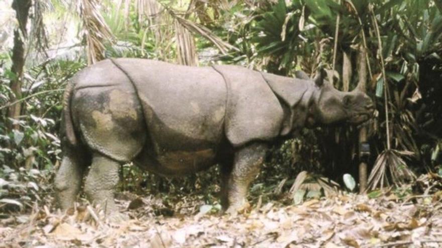 El Zoo de Córdoba prepara la llegada de dos rinocerontes asiáticos