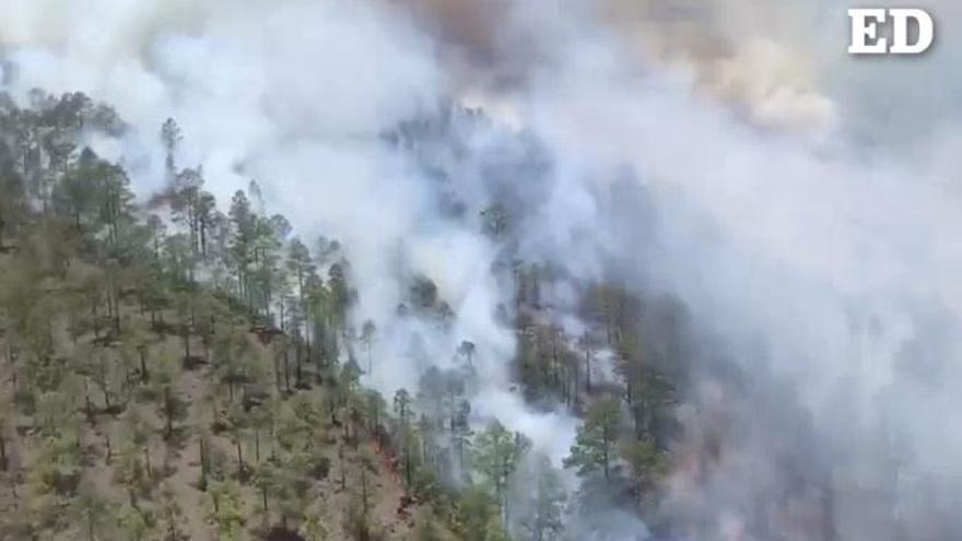 Siete medios aéreos y 170 efectivos tratan de controlar el incendio de Arico