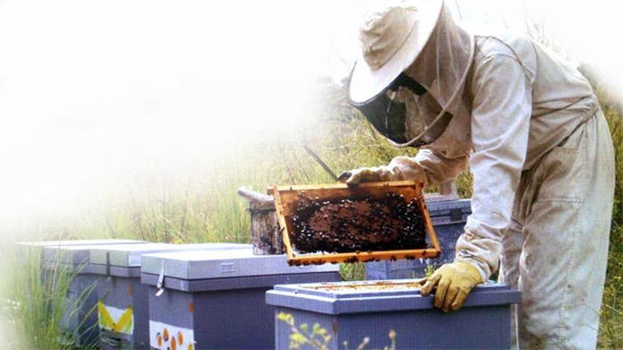 Las abejas valencianas se frenan por las lluvias