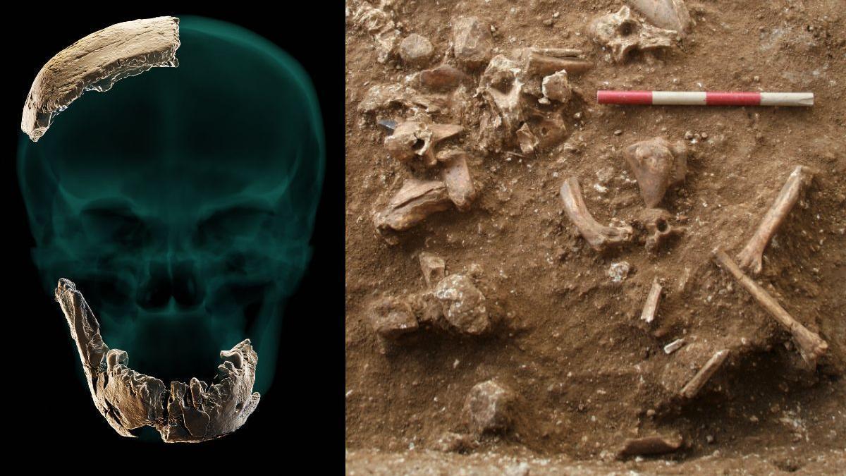 A la izquierda, reconstrucción de los restos óseos hallados. A la derecha, vista del yacimiento arqueológico de Nesher Ramla