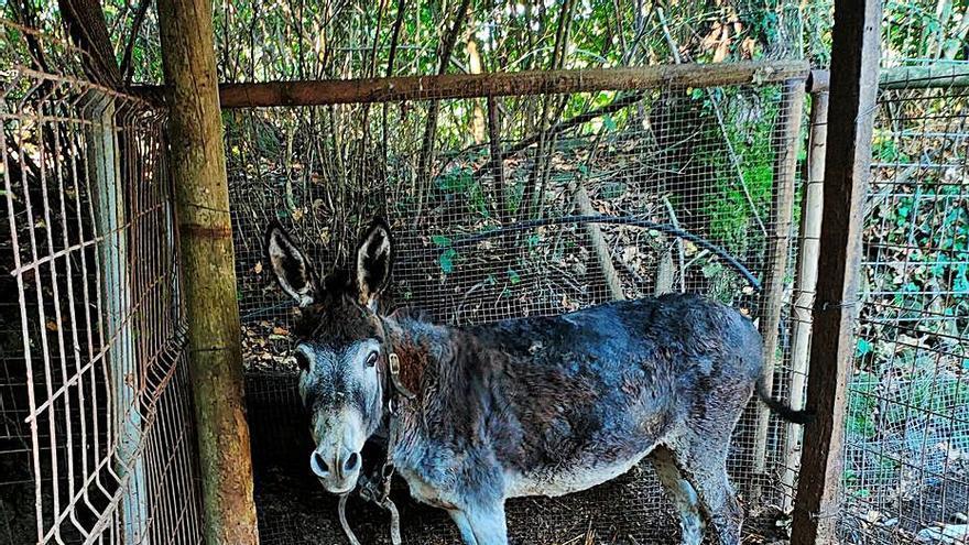 La Guàrdia Civil investiga un olotí per maltractament animal