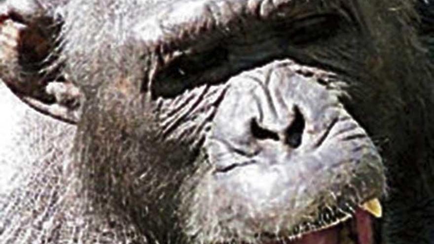 Cuando estalló la guerra entre los chimpancés
