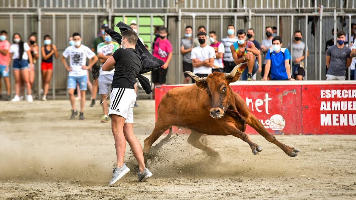 Una de las vacas de Marqués de Saka exhibidas esta tarde en el Concurso de Ganaderías de la Pascua Taurina de Onda.