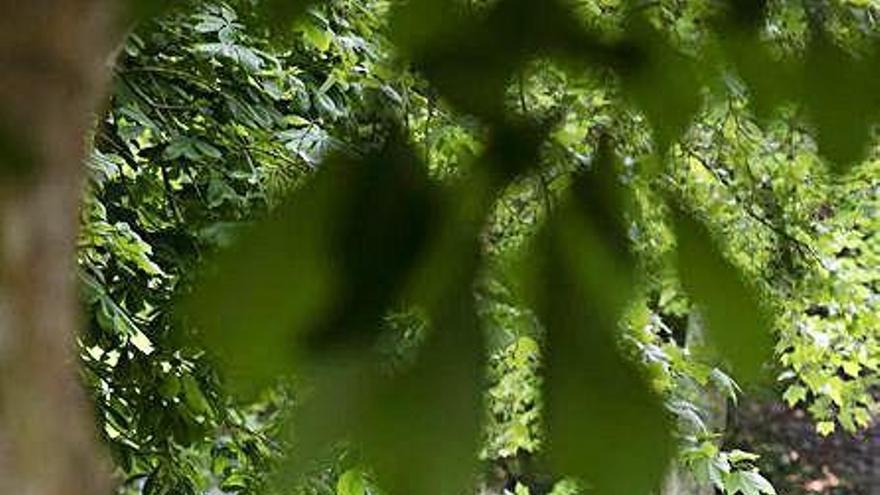 Sustituyen por especies autóctonas árboles secos en el Parque de Ferrera
