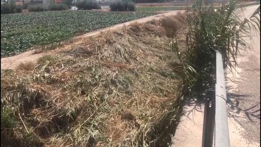 Alertan del peligro del desbroce de la rambla Ylorci en Lorca