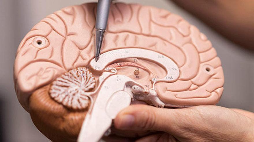 Los límites del cerebro: el caso real de una niña con AADC