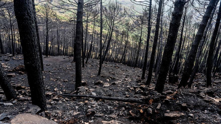 """La extinción del incendio en Sierra Bermeja, """"cada vez más cerca"""""""