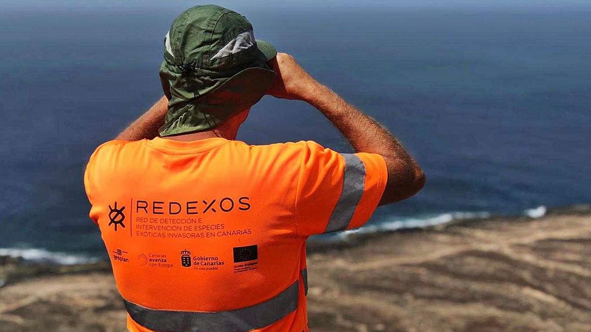 Técnico de la RedEXOS.