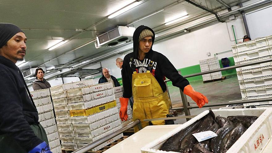 La flota de bajura impulsa el programa de aprovechamiento de vísceras de pescado