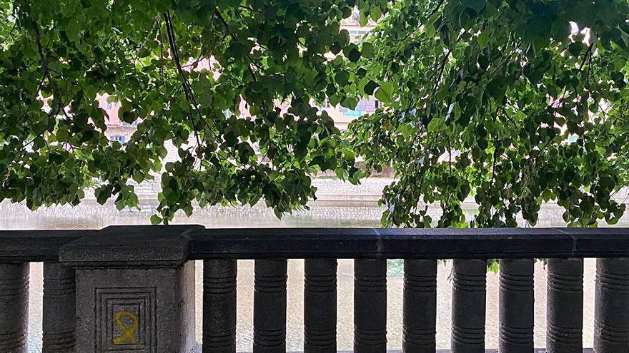 Arbres atapeïts al passeig Canalejas