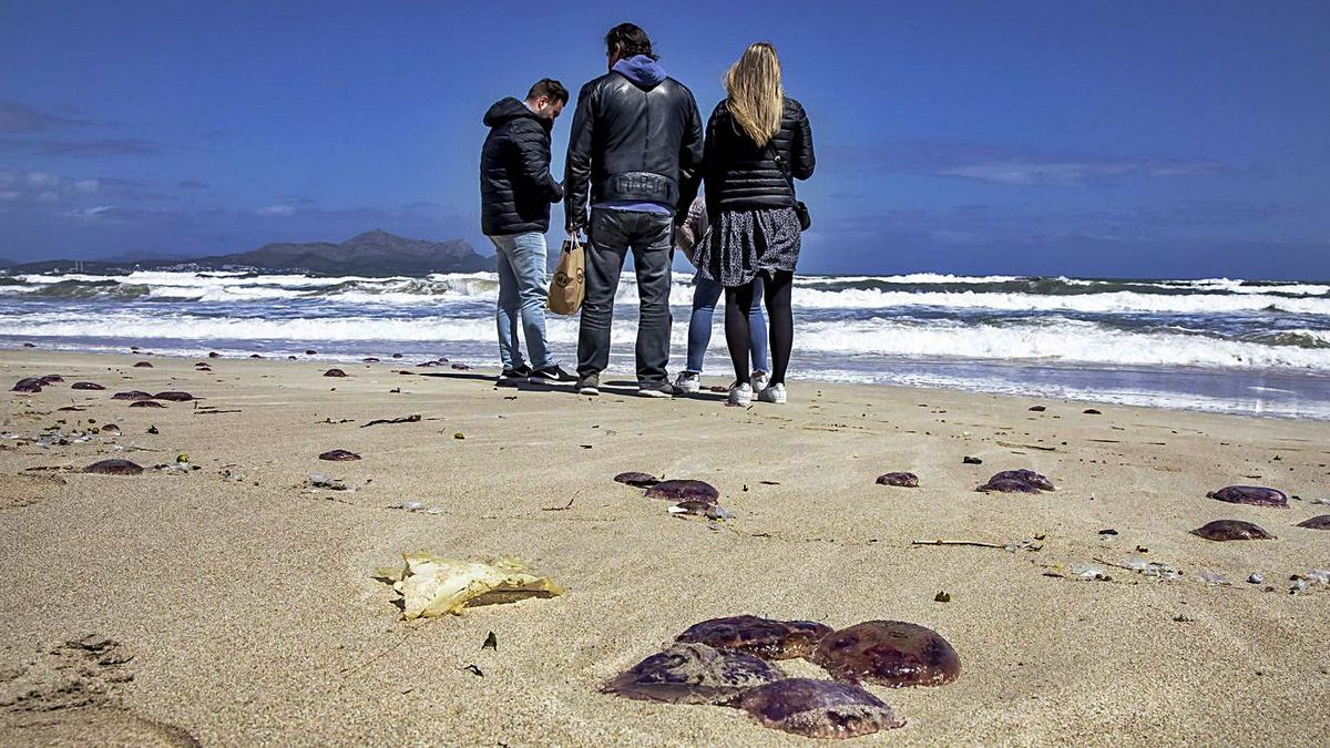 Las medusas, arrastradas a la playa por el mar, despertaron una gran expectación. | B. RAMON
