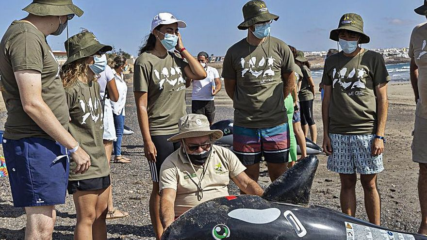 Salvar de la muerte a las ballenas