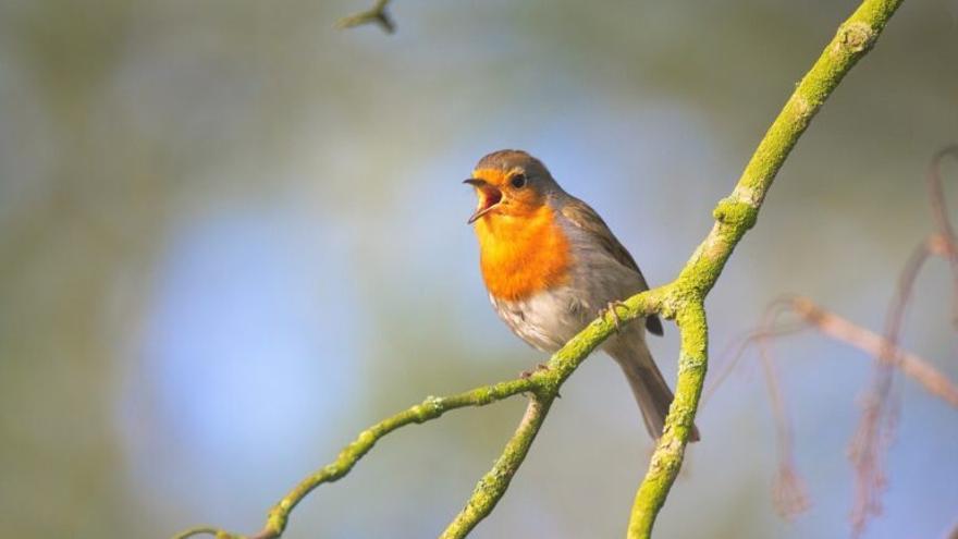 ¿Mejoran la salud los sonidos de la naturaleza?