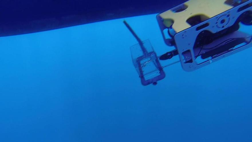 Suelta de tiburones en Cartagena con la ayuda de un robot submarino