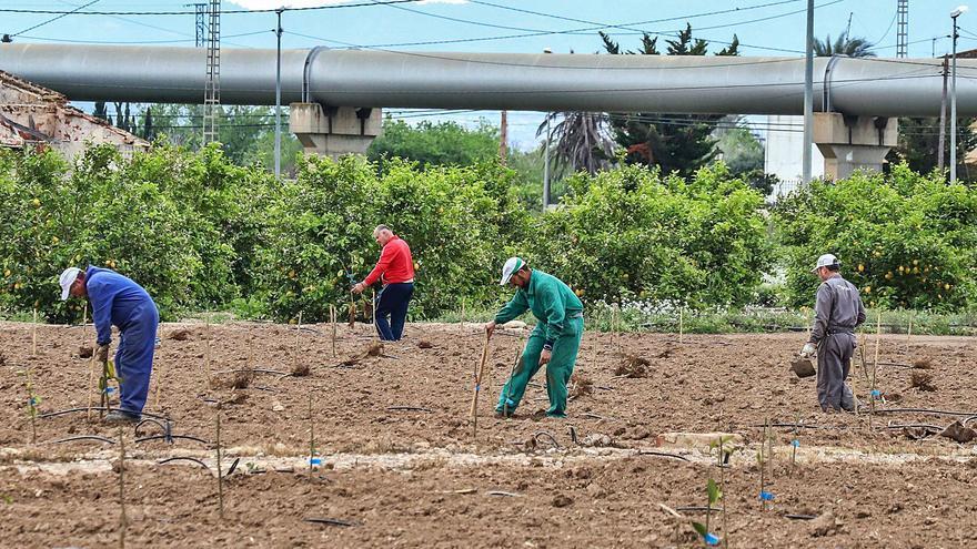 La Cámara de Orihuela cifra en 30.000 empleos y 700 millones las pérdidas en la Vega Baja si se reduce el Tajo-Segura