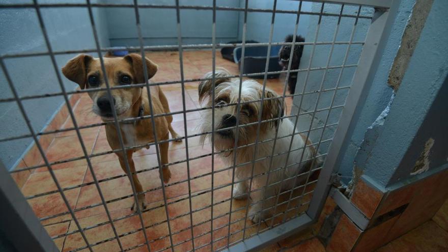 Os Palleiros hace un llamamiento a la adopción tras recibir 32 cachorros en las últimas semanas