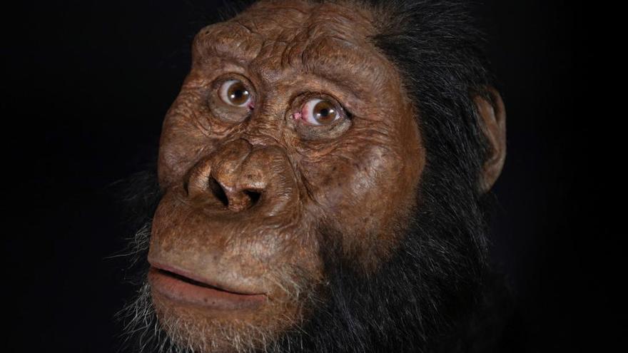 Hallan en Etiopía el cráneo de un antepasado del Homo Sapiens
