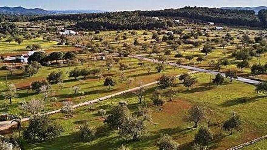 La producción ecológica en Ibiza se ha doblado durante la última década