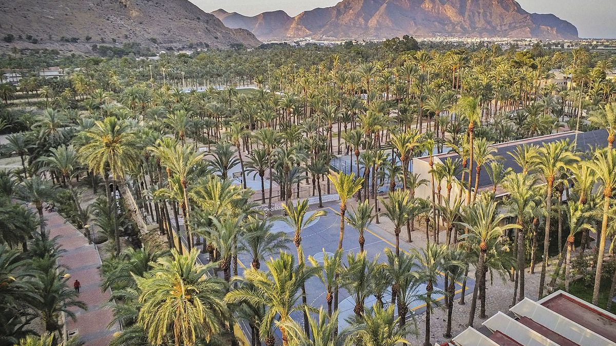 View of the Orihuela palm grove, the second with the most specimens in Europe, after Elche.