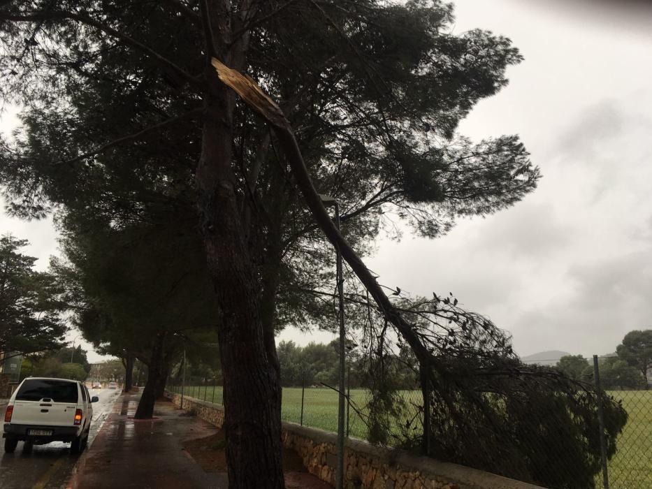 Sturmschäden in Son Servera.