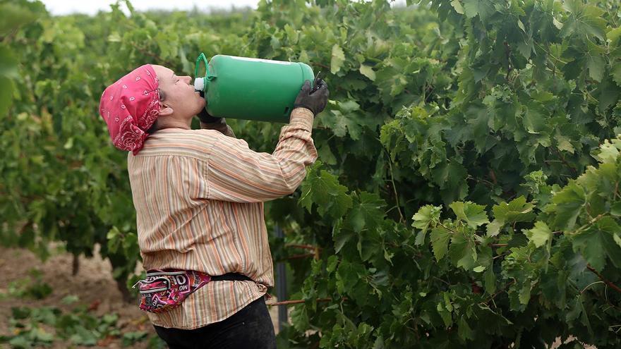 La última ola de calor causa daños en viñedos de Montilla-Moriles