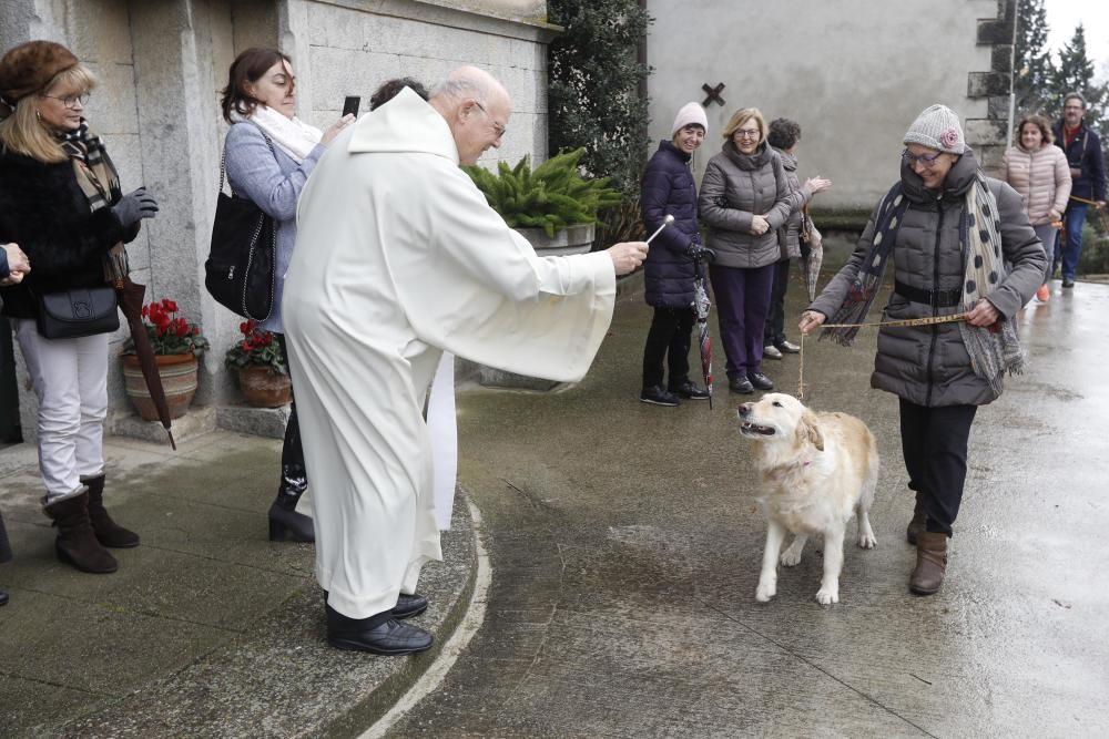 Benedicció dels animals per Sant Antoni a Girona