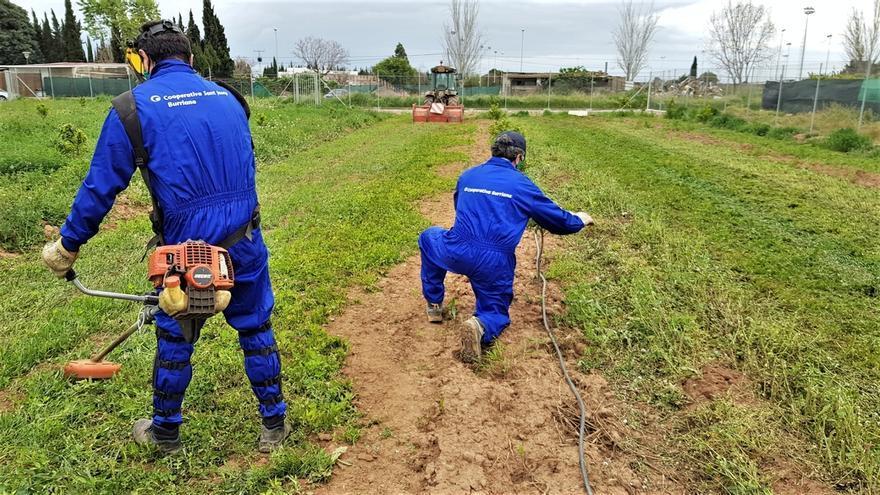 La Cooperativa de Burriana apuesta por la producción ecológica