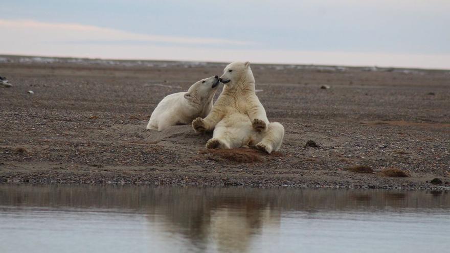 Biden revoca los permisos de Trump para buscar petróleo en un santuario natural del Ártico