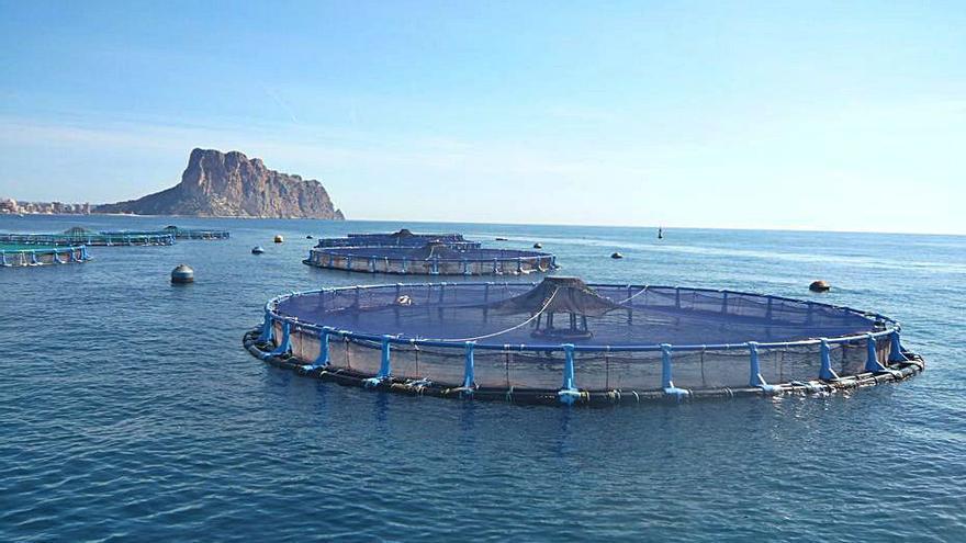 Avramar integra cuatro empresas para liderar la acuicultura