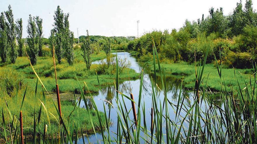 Cepsa: acción por la biodiversidad y el ecosistema