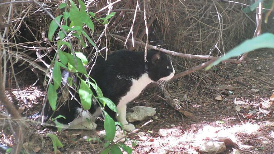 La protectora de Burjassot busca voluntariado para las colonias felinas