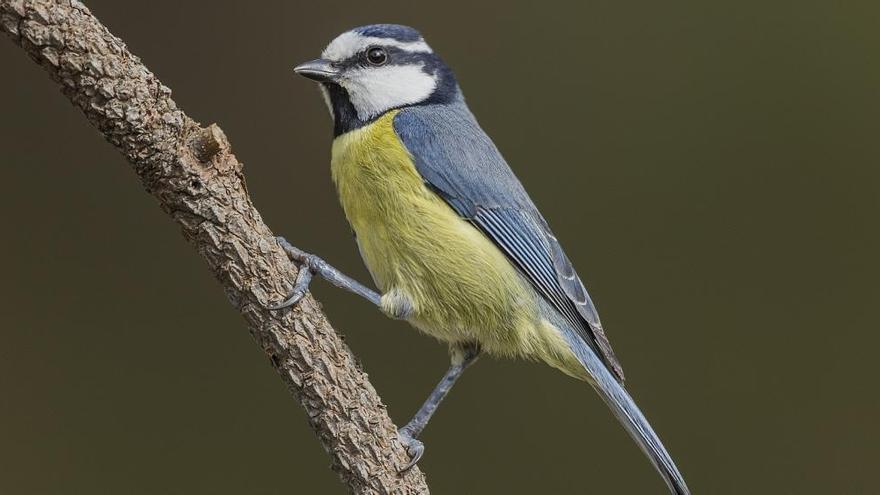 Investigadores asturianos participan en el mayor estudio mundial con datos filogenéticos sobre aves insulares