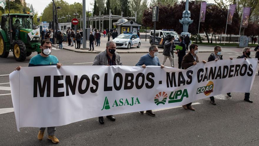 """Asaja protestará contra el lobo """"en la calle, en los juzgados y donde haga falta"""""""