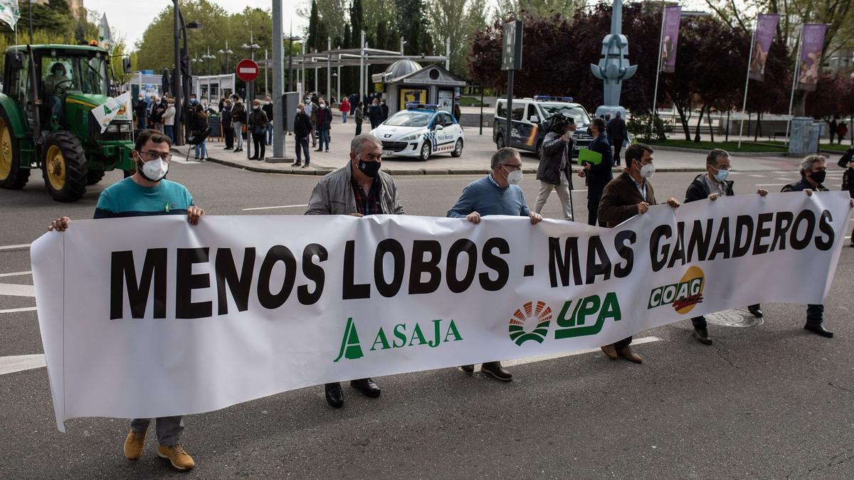 Menos lobos, más ganaderos. Manifestación contra la prohibición de la caza del lobo en Zamora.