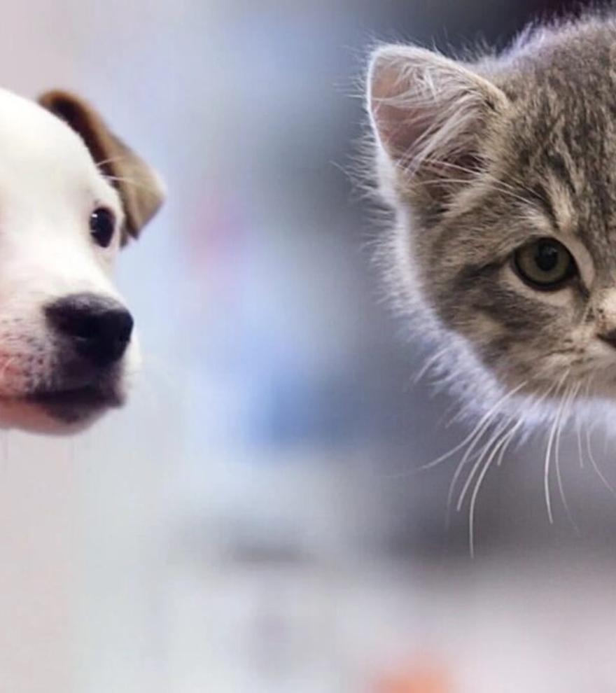Las mascotas no se podrán vender en tiendas, según la nueva Ley de Bienestar Animal