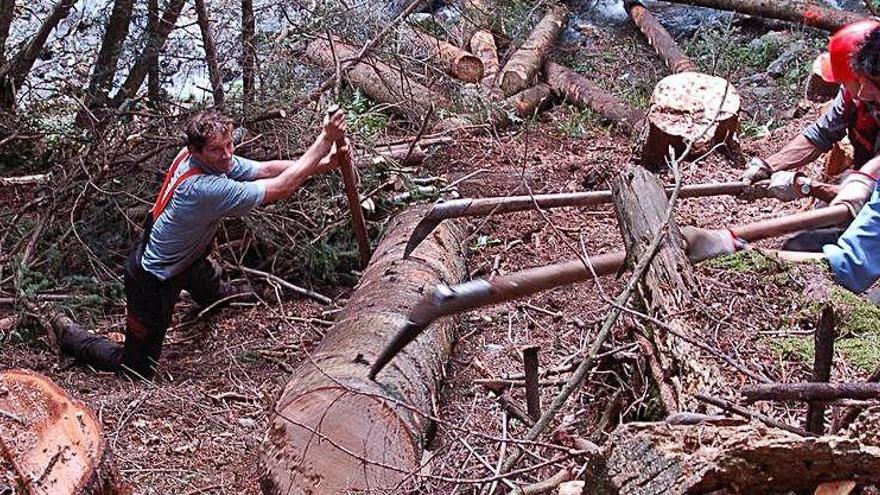 Científics desmenteixen un estudi sobre l'augment de tala d'arbres a Europa