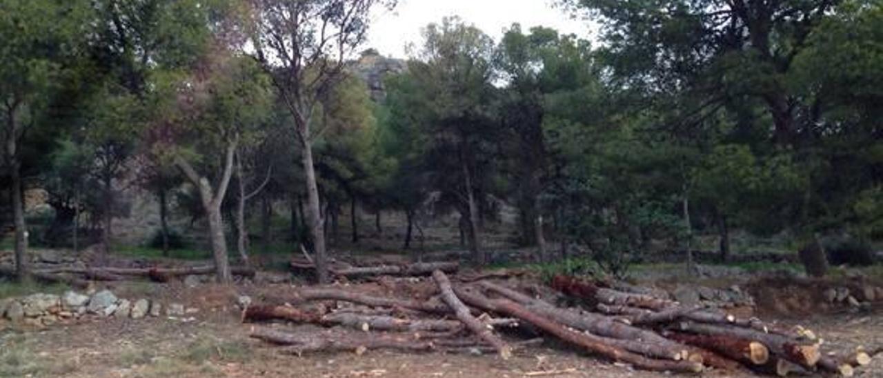 Propietarios de Espadà y la Unió exigen al Consell que asuma el coste de erradicar la plaga de los pinos