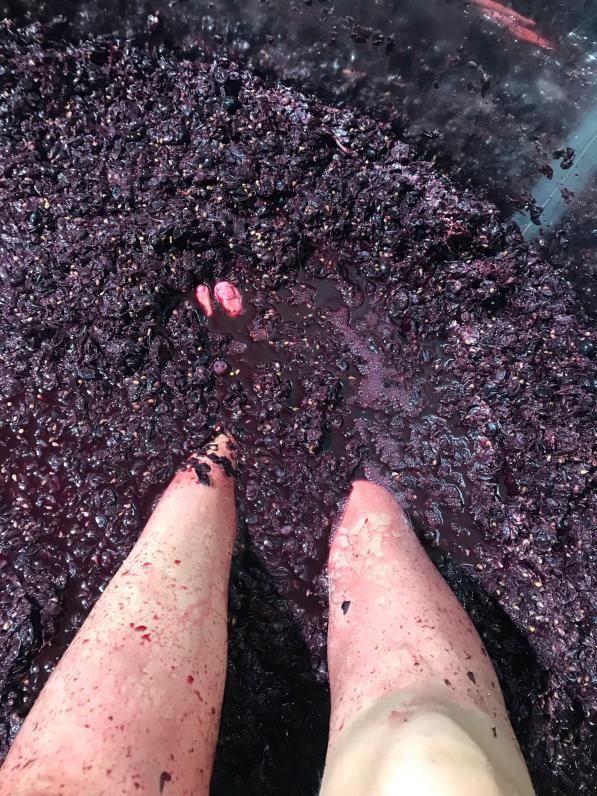 40.000 kilos de uva que nace en el valle del Montgó