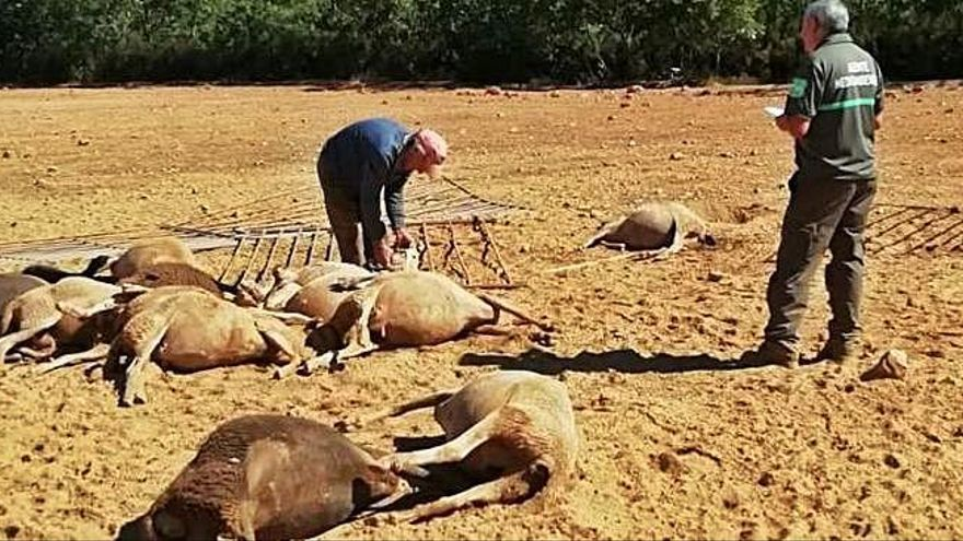 El subdelegado del Gobierno, partidario de indemnizar a los ganaderos por el lobo
