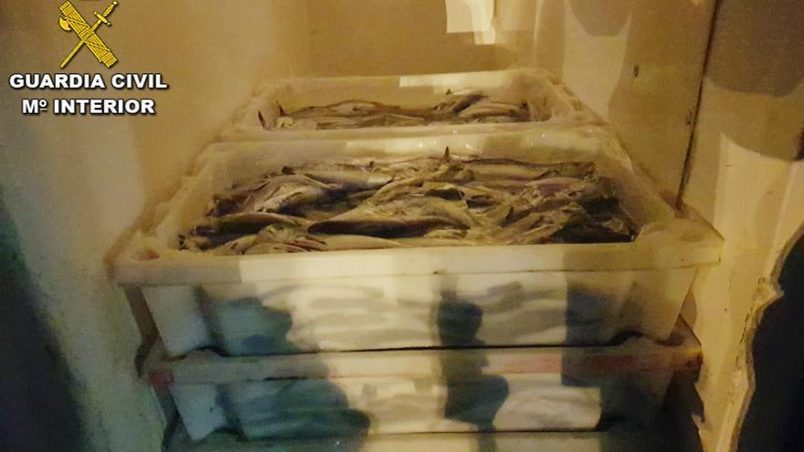 Incautados 121 kilos de merluza camuflada en Bueu