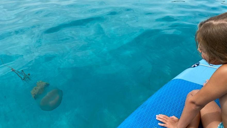 Otra gran medusa, esta vez viva, aparece en aguas de Formentera