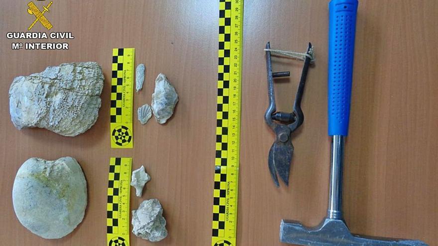 Denunciado por expoliar 19 piezas paleontológicas junto al Pantano de Elche