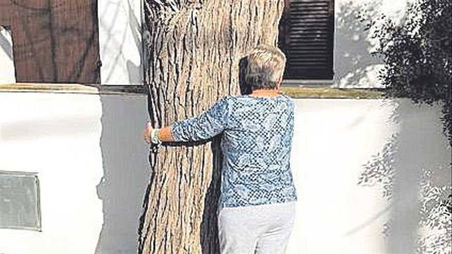 La tala de medio centenar de árboles en s'Illot y Cala Morlanda indigna a muchos vecinos
