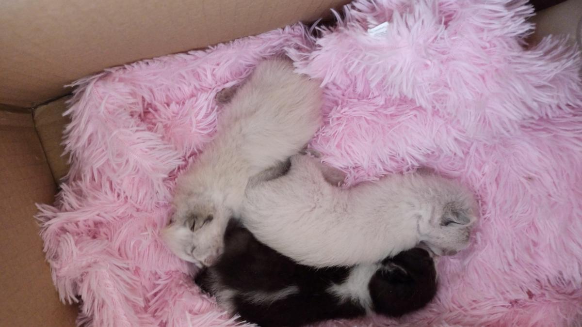 Gatos encontrados en el colegio de La Paz.