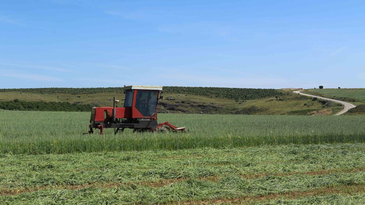 Un agricultor en el campo con un tractor.