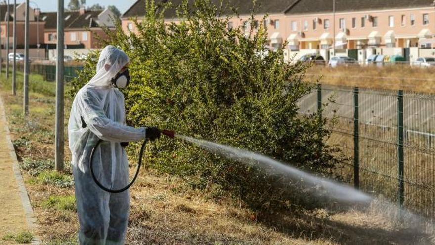 Comienza la fumigación en Coria y Puebla del Río por el virus del Nilo