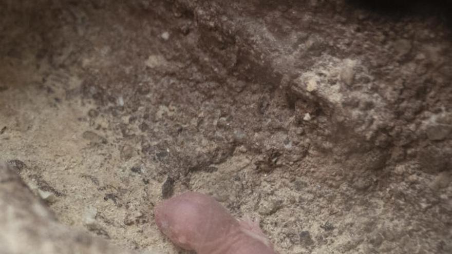 Nace una camada de ratas topo en Bioparc