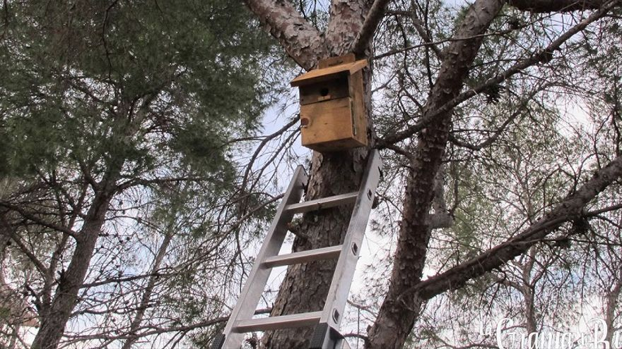 Revisión de cajas nido en La Costera de Puçol, primera actividad del otoño