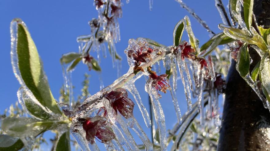 Cultivos de uva, albaricoque y ciruela, los más dañados por las heladas en la región