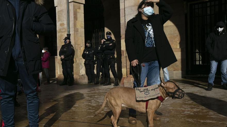 """SOS de los animalistas de Oviedo: """"El Ayuntamiento tiene que retirar ya la concesión de la perrera"""""""